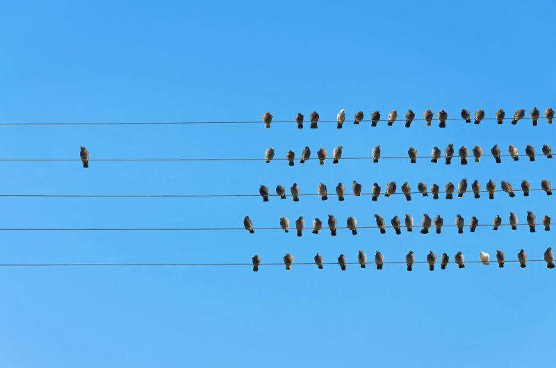 """Képtalálat a következőre: """"birds on the wire group"""""""